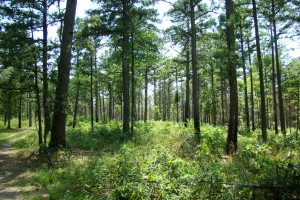 Dębowe lasy w  Ozark/Missouri Zdjęcie ze strony: https://greatmissouribirdingtrail.com