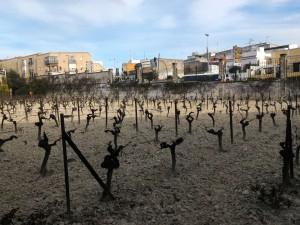 Zdjęcie szkółki  przy winnicy należącej do Gonzales Byass / zdjęcie zinnejbeczki.com